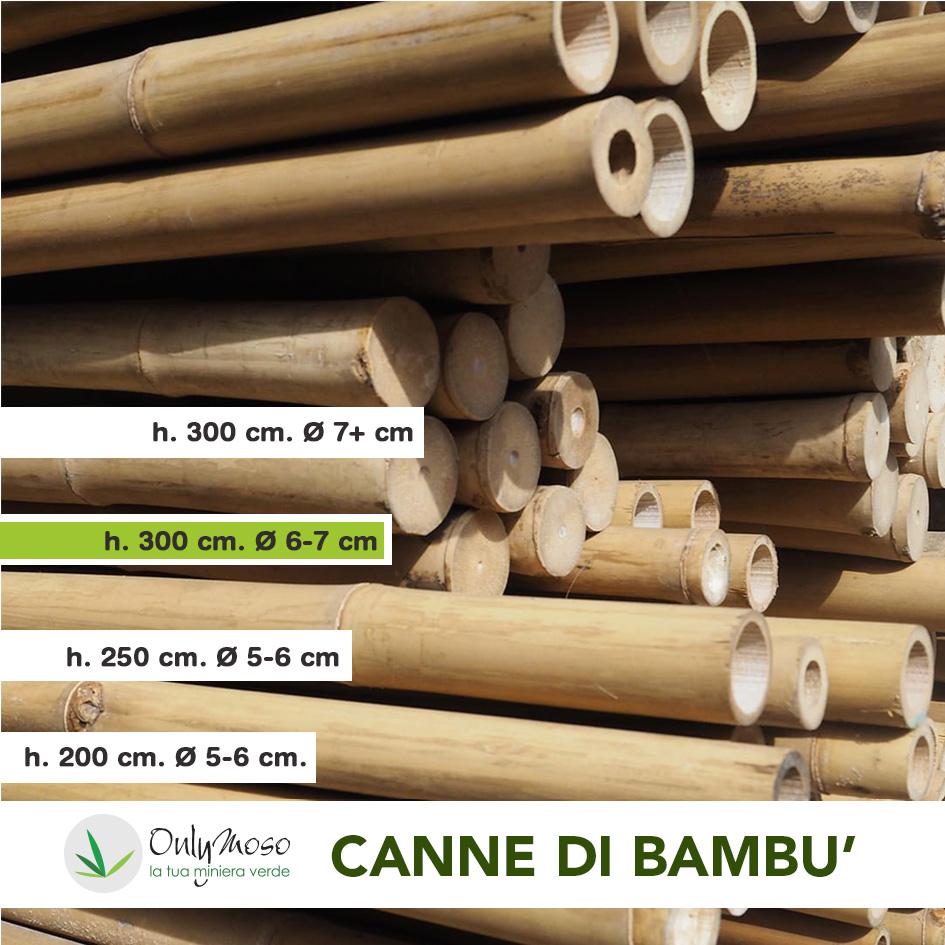 Canne bamboo 300 cm